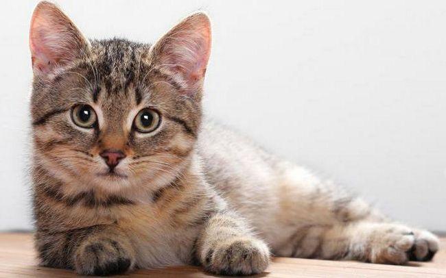 клички для кішок