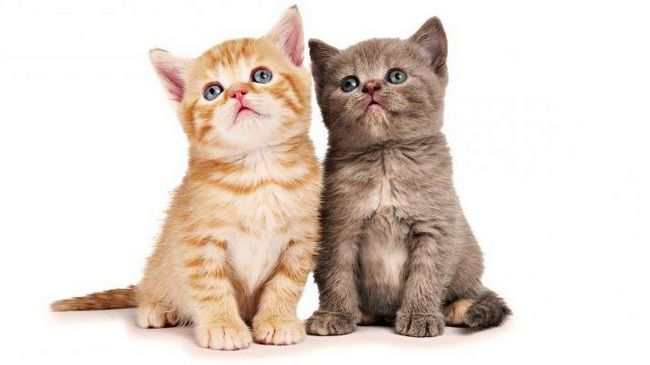 клички для кішок дівчаток