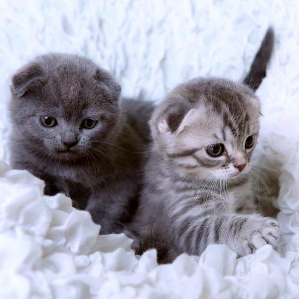 популярні клички для кішок