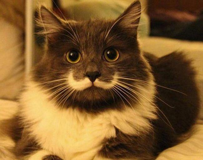 російські клички для кішок